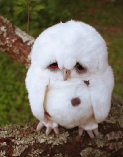 saddest_owl